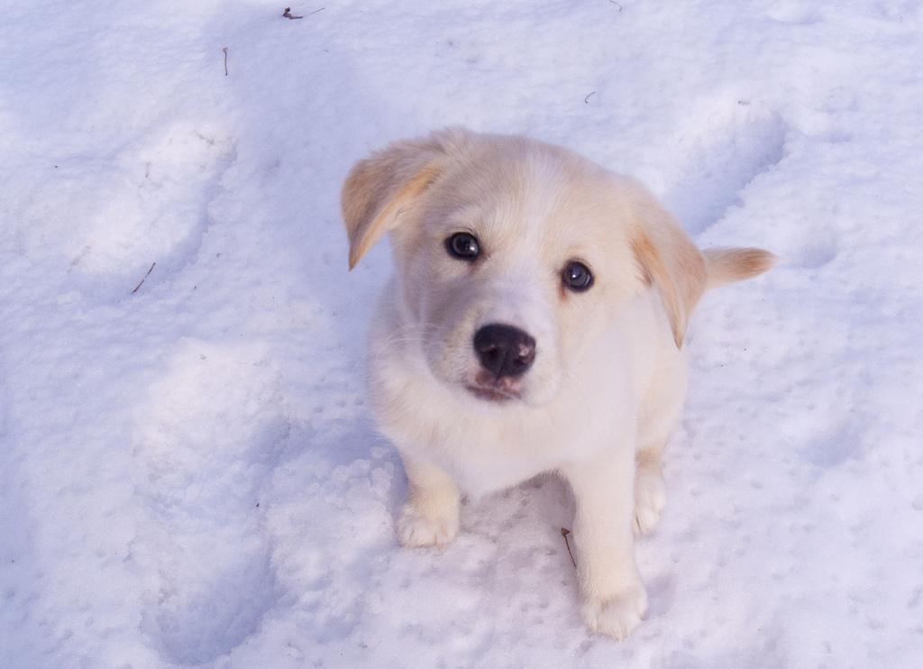 Život je pes #zivot #boj #optimista